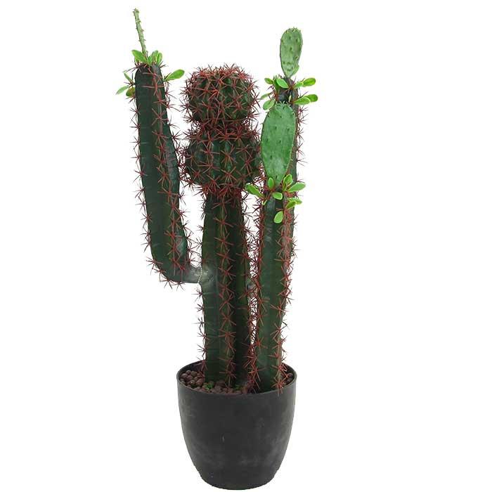 grand cactus en pot collection design inspiration pour le jardin et son compl ment. Black Bedroom Furniture Sets. Home Design Ideas