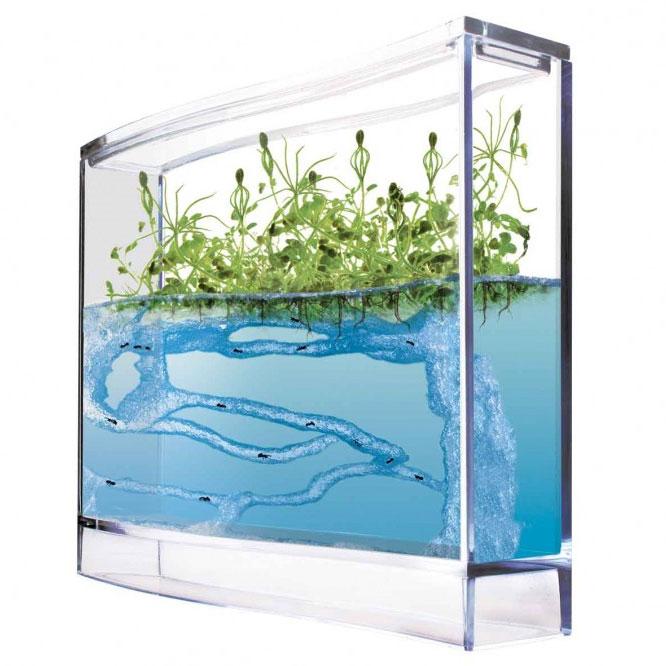 vivarium fourmili re antquarium forest un microcosme la maison. Black Bedroom Furniture Sets. Home Design Ideas