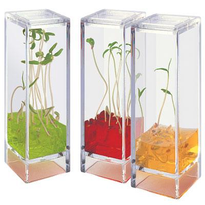 Laboratoire Botanique Plantarium Garden Lab